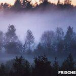 Luftbefeuchter: Wie viel Prozent Luftfeuchtigkeit sind ideal?
